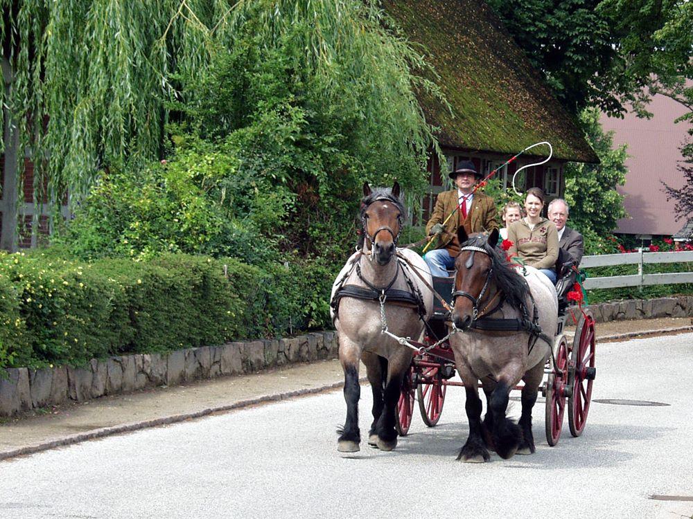 Rheinisch-Deutsches Kaltblut vor der Hochzeitskutsche