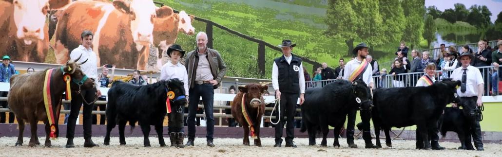Dexter Kuh Livia Dun Bundessiegerin der Dexterkühe Schwar-Rot-Gold Robust im Rahmen der Grünen Woche Berlin 2020
